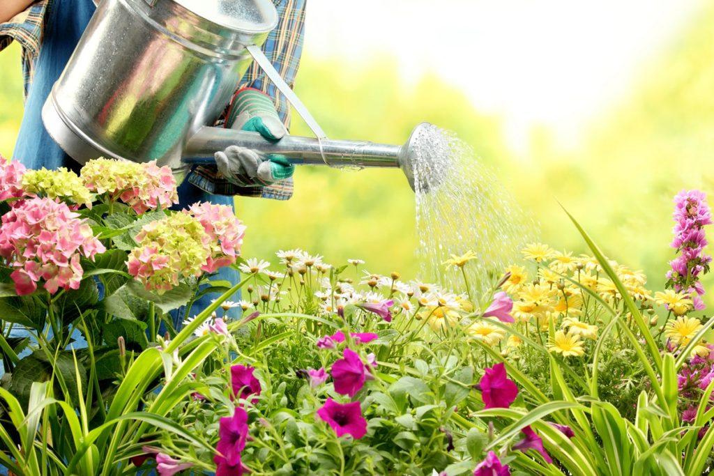 planting an garden